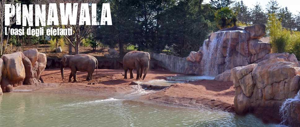 Pinnawala - l'oasi degli elefanti