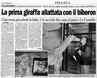La prima giraffa allattata col biberon