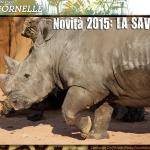 rinoceronte01