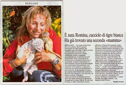 Romina: cucciolo di tigre bianca