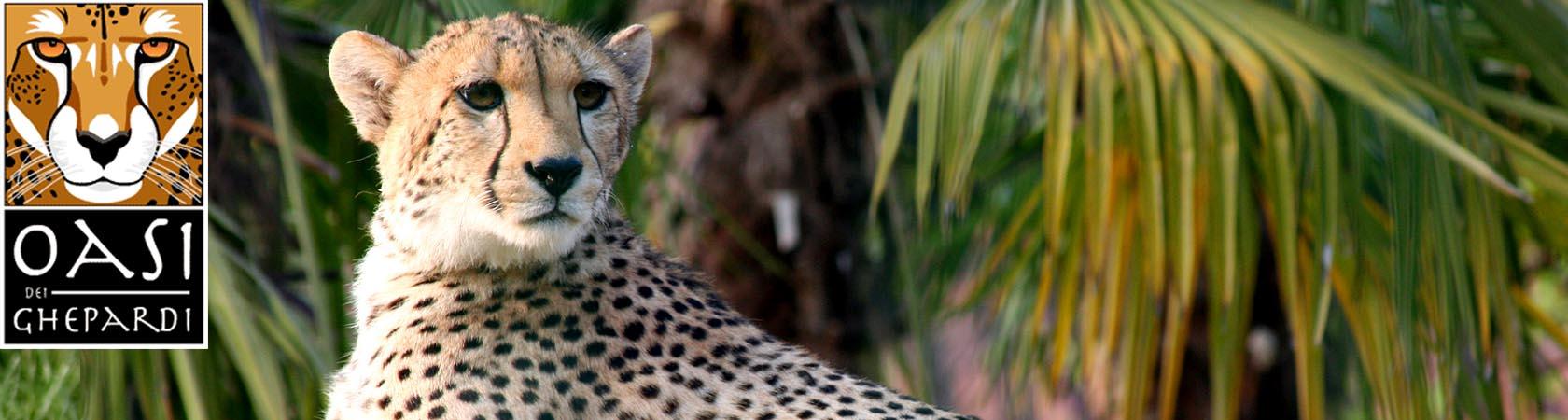 oasi-dei-ghepardi-parco-faunistico-le-cornelle03