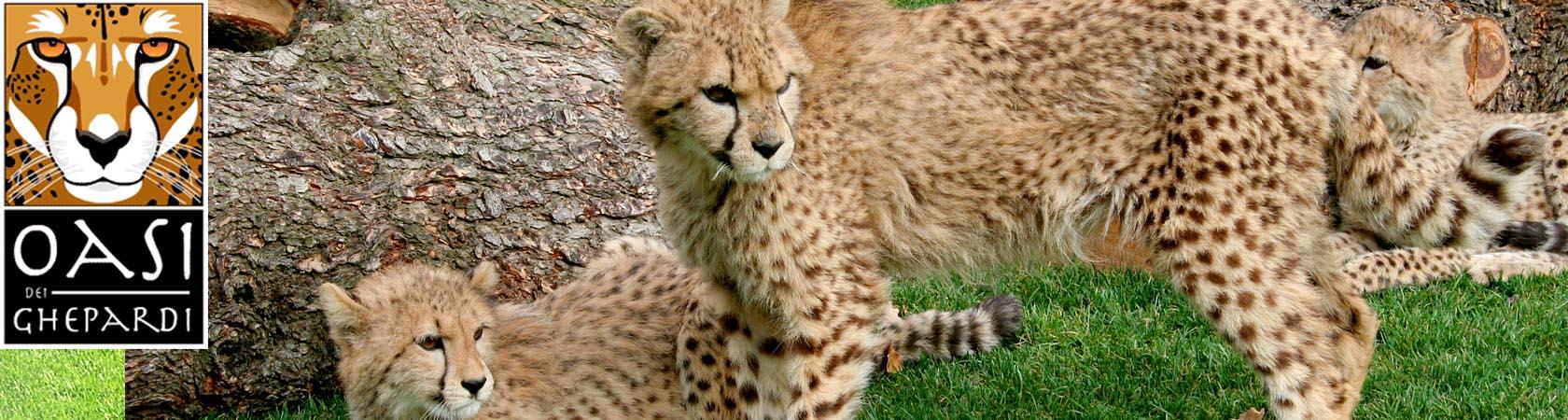 oasi-dei-ghepardi-parco-faunistico-le-cornelle06