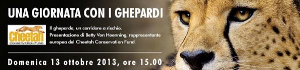 Cheetah Conservation Fund