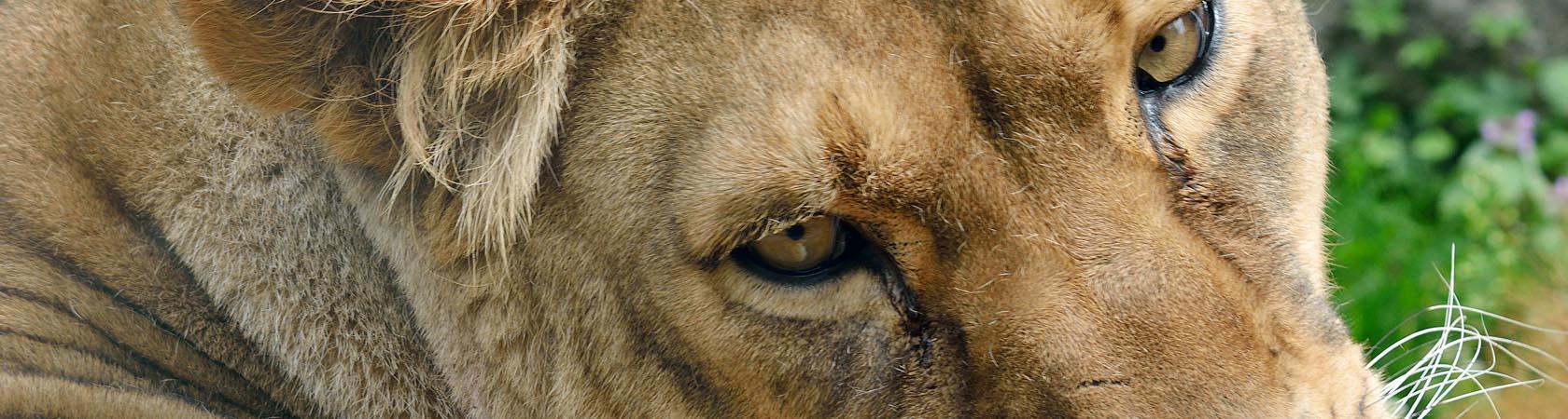 leonessa-le-cornelle-leonardodelfini01