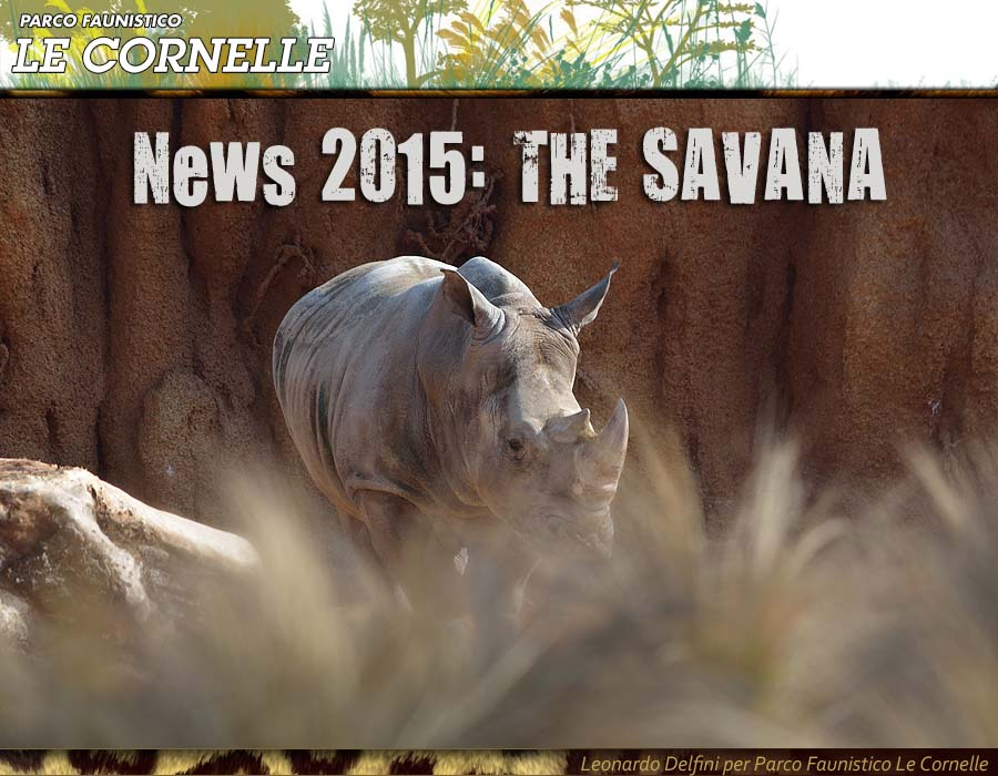 news-savana-2015