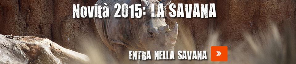 savana-novita-2015-small2