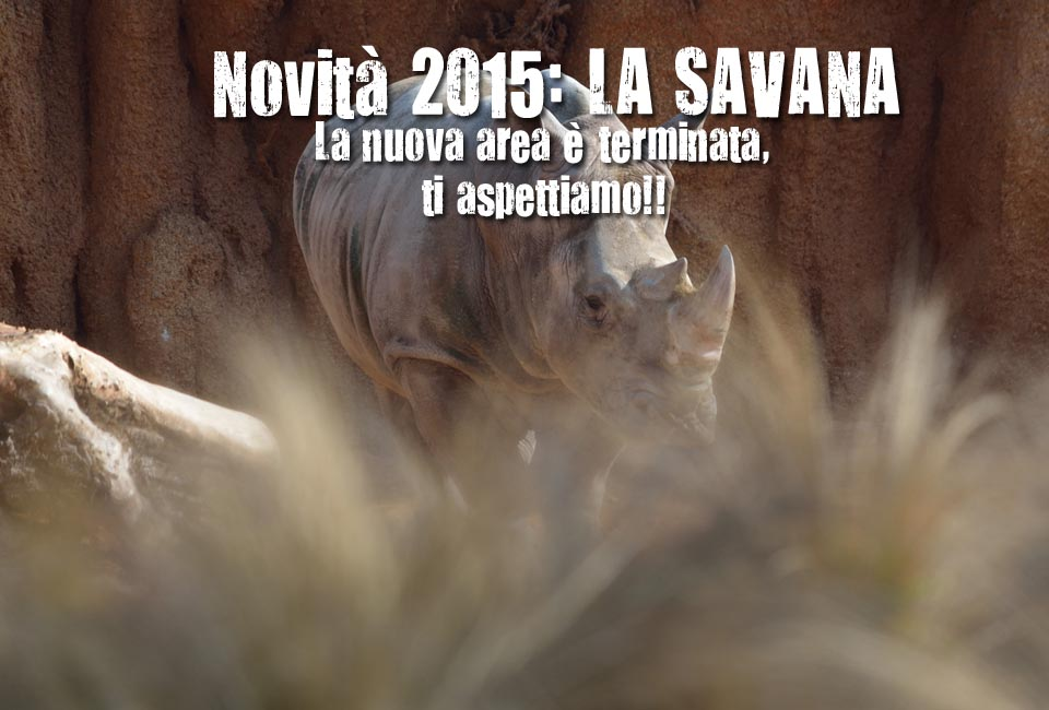 savana-novita-2015-big1
