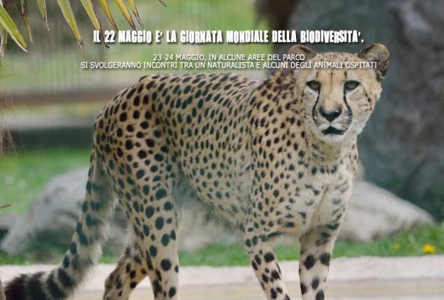 ghepardo-biodiversita