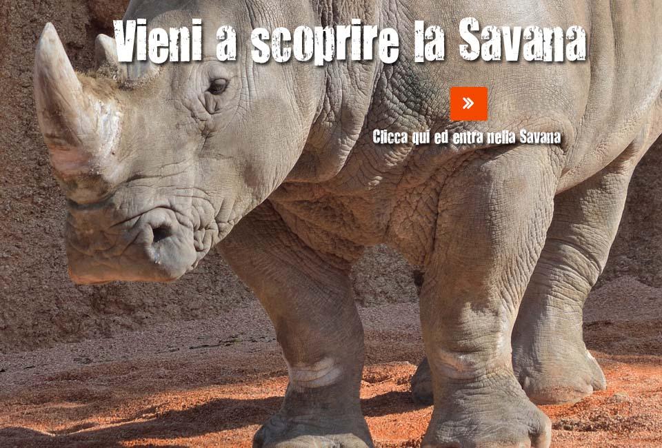 savana-20151