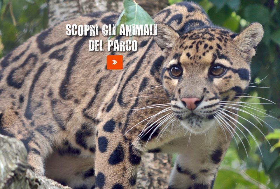 leopardo-nebuloso-homepage