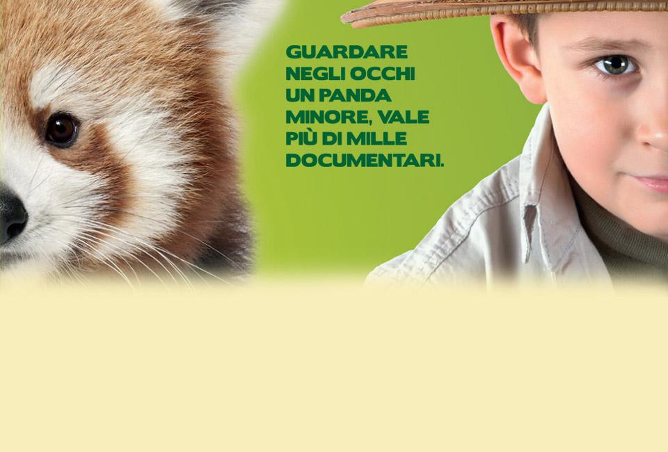 panda-bambino-slogan-cornelle2016