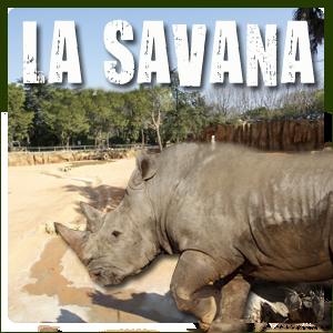 La Savana