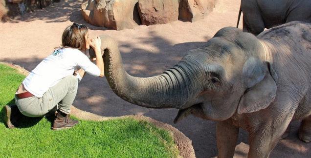 ico-news-educazoo-elefanti