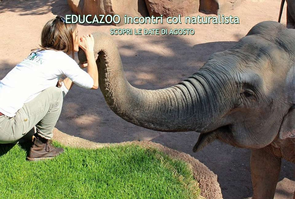 slider-educazoo-agosto-2017