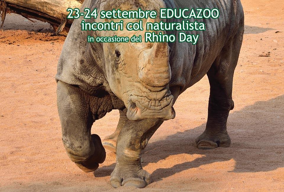 slider-home-rhinoday