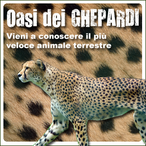 Oasi dei Ghepardi