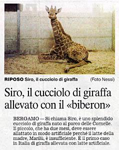 Siro: il cucciolo di giraffa allevato col biberon