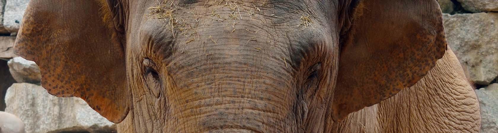 elefante-parco-faunistico-le-cornelle-leonardodelfini