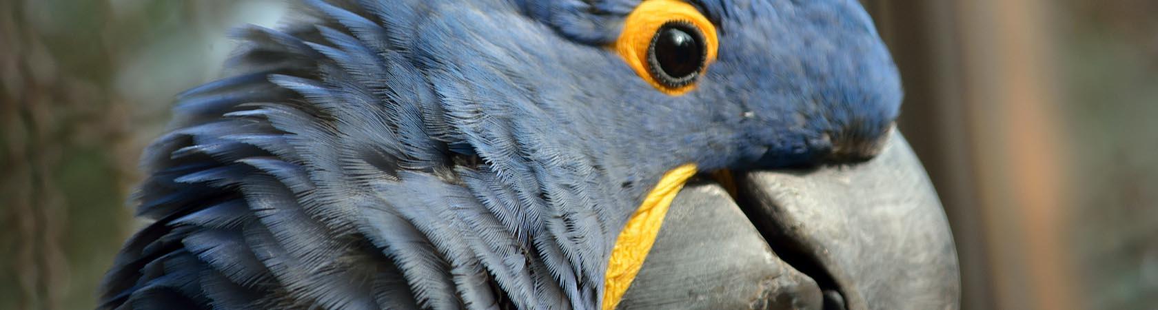 pappagallo-parco-faunistico-le-cornelle01