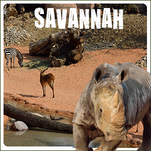 new2015-savana-banner-homepage-small-lecornelle